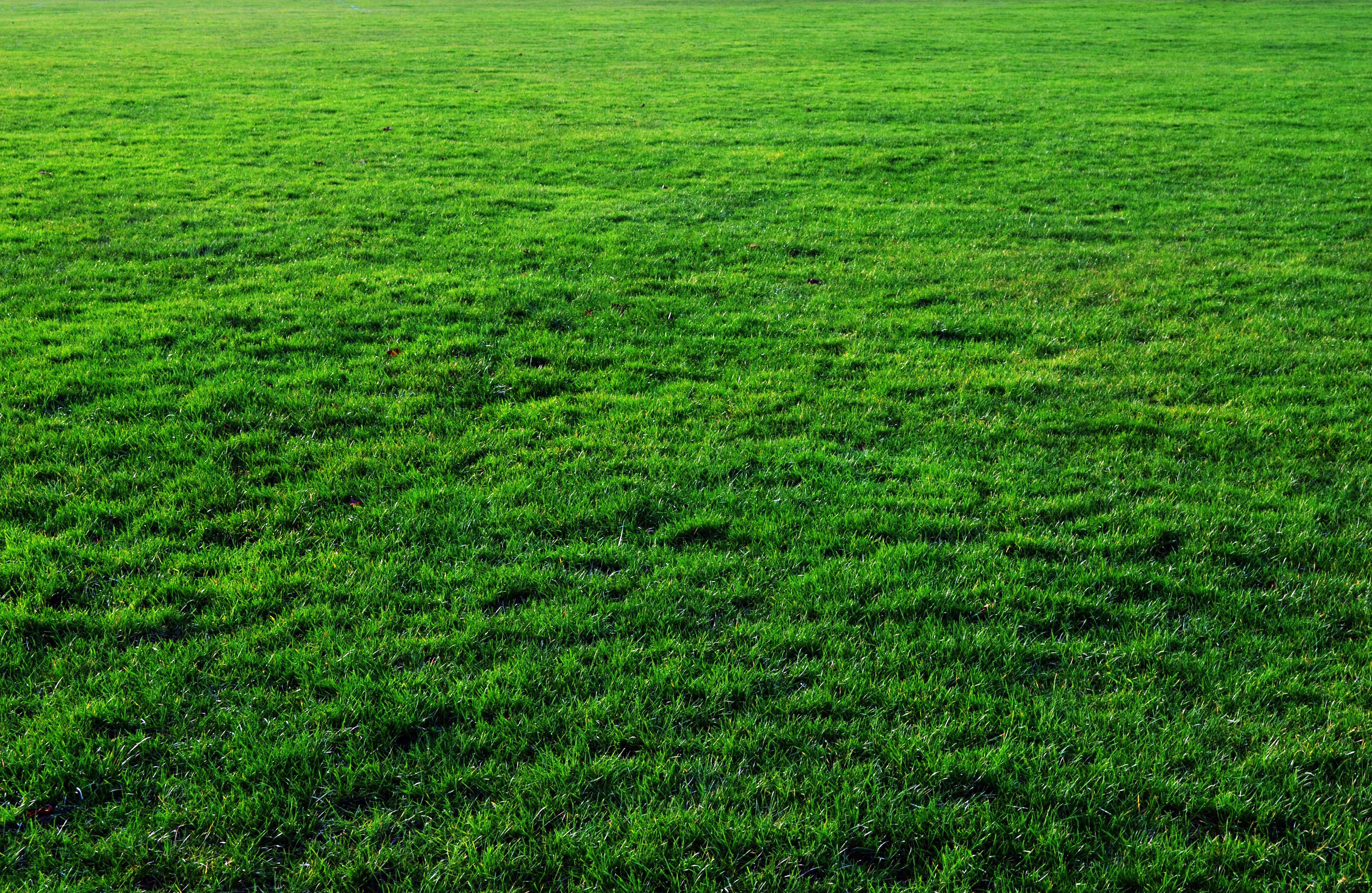Seven Grass Textures or Lawn Background Images www 5174x3366