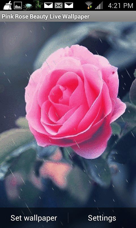 Pink Rose Live Wallpaper Android Live Wallpaper download 480x800