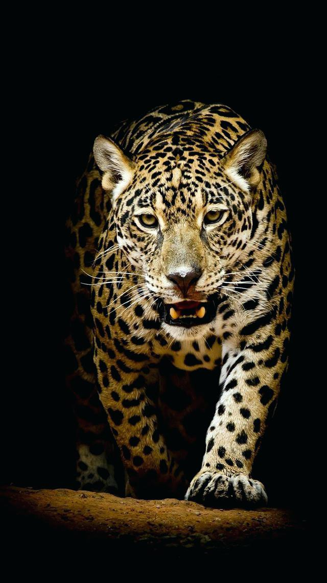 Download Animal Wallpaper 32 For Your Various Animals 640x1142