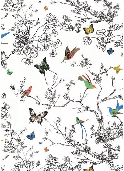 Bird Wallcovering Wallpaper PicsWallpapercom 403x552