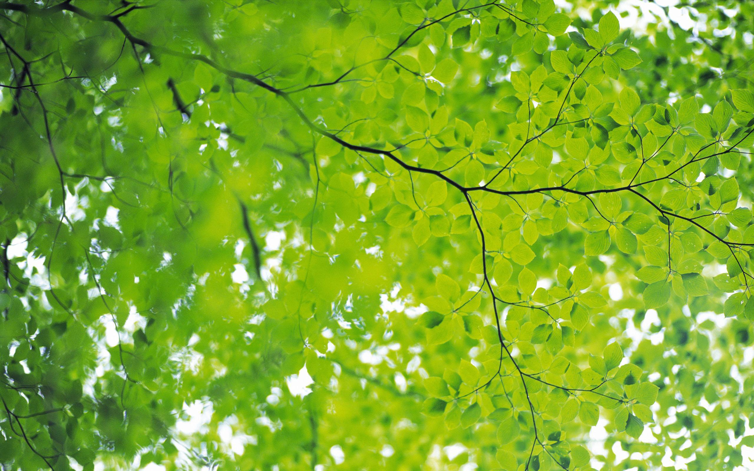 Free Download Green Nature Wallpaper Hd Wallpaper 1017619 2560x1600 For Your Desktop Mobile Tablet Explore 49 Green Nature Wallpaper Green Flower Wallpaper Green Nature Wallpaper Desktop Green Wallpaper Designs Nature
