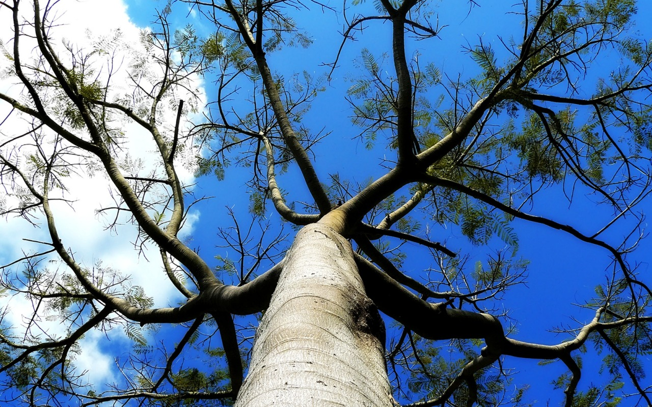 downloadfileswallpapers1280 800 widescreentree branches wallpaper 1280x800