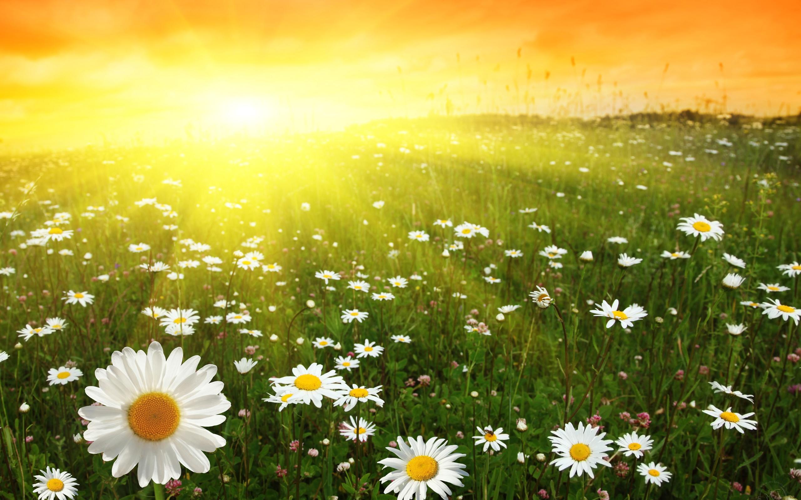 [42+] Sunny Day Wallpaper Desktop on WallpaperSafari