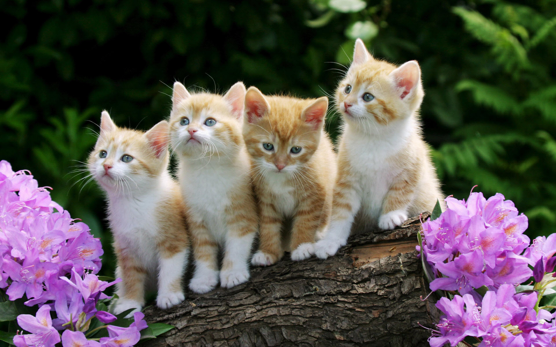 Curious Kittens Wallpapers HD Wallpapers 1920x1200