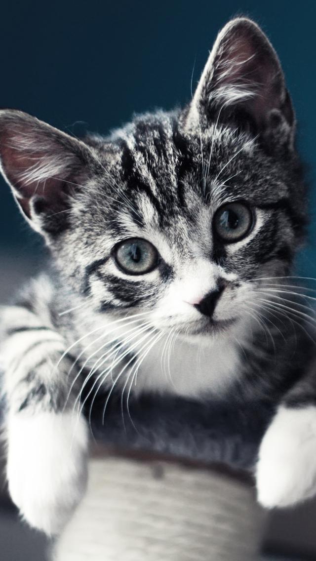 Free Download Cute Baby Cat Iphone 5s Wallpaper Download Iphone