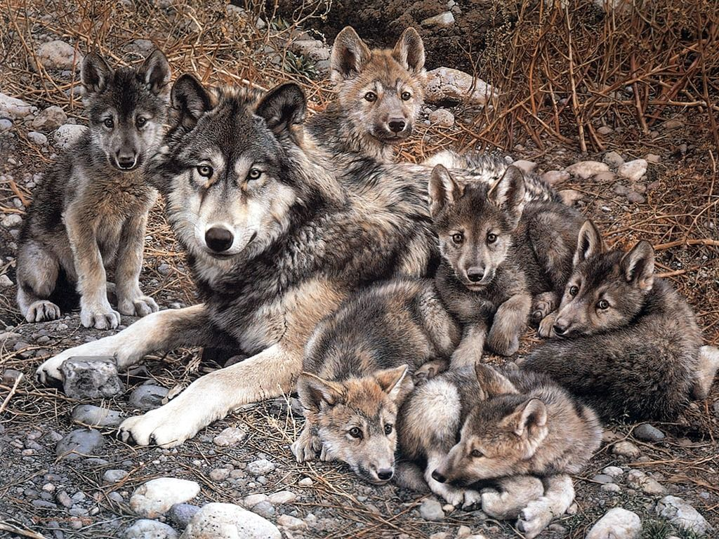 Wolf with Cubs   Animal Cubs Wallpaper 29105428 1024x768