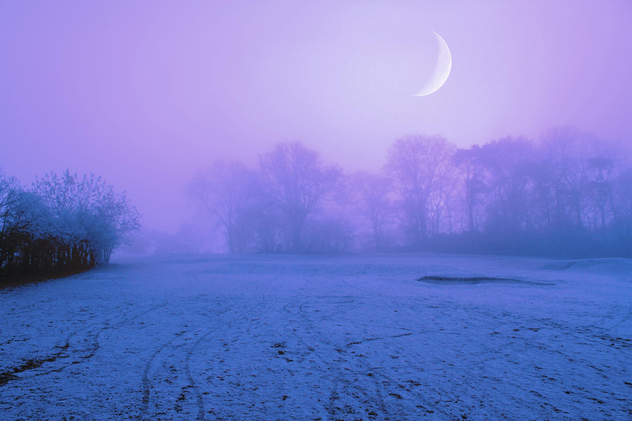 Snowy Moonlight Wallpaper