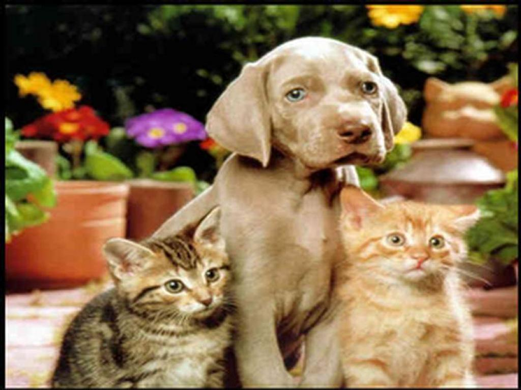 Cats And Dogs Wallpapers 1024x768