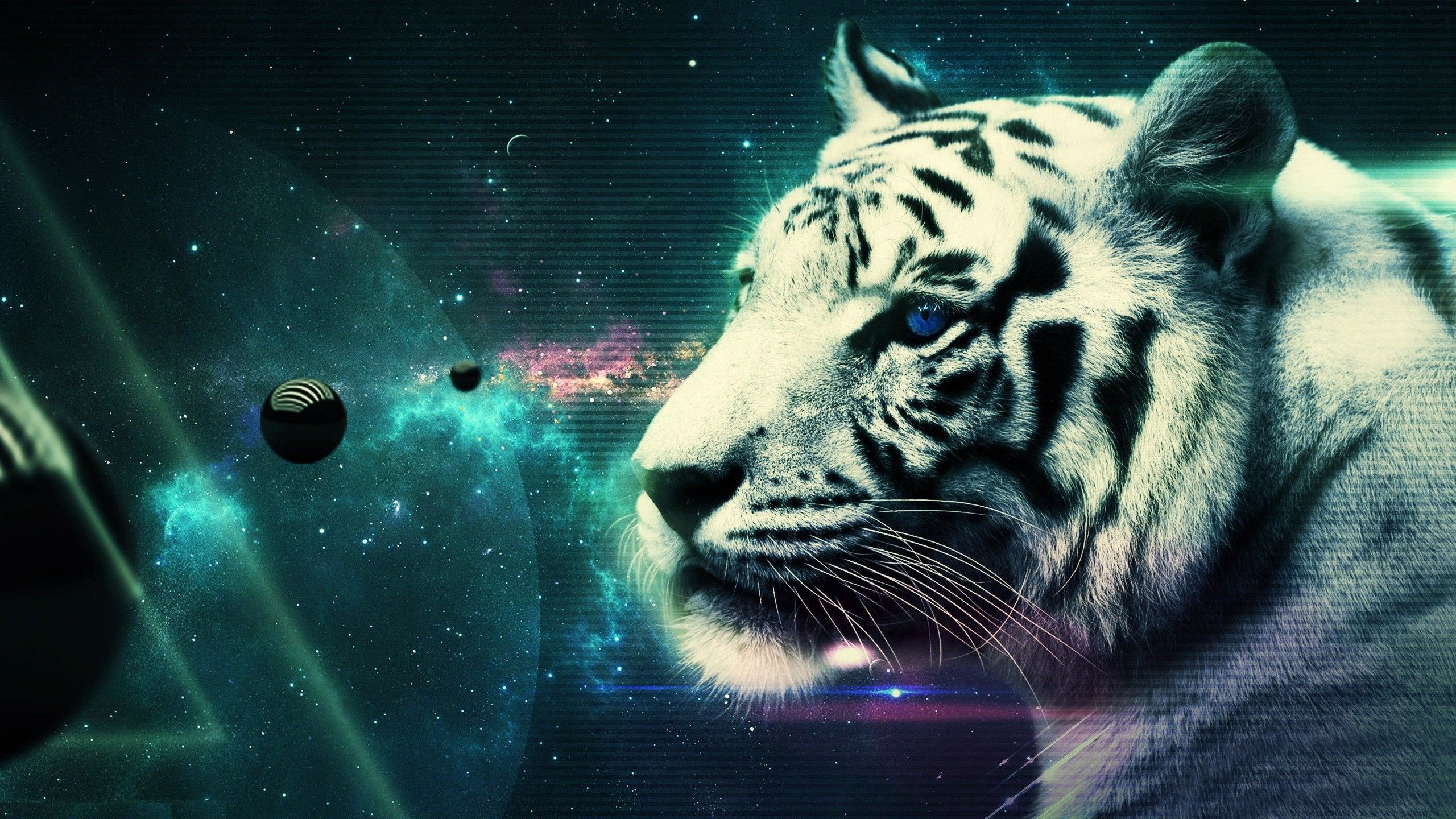 White Tiger Hd Wallpaper - WallpaperSafari
