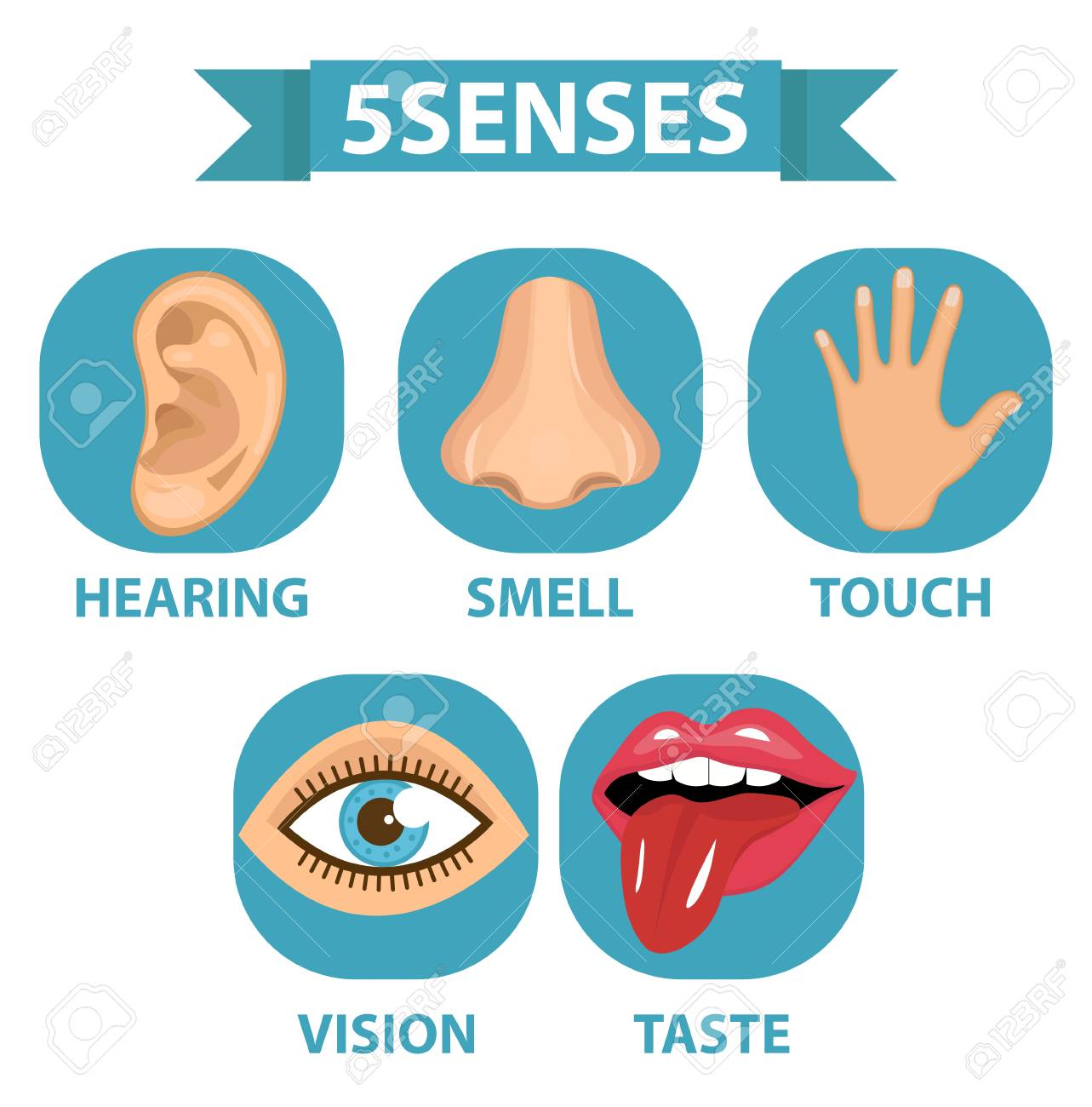 Five Senses Icon Set Touch Smell Hearing Vision Taste 1283x1300