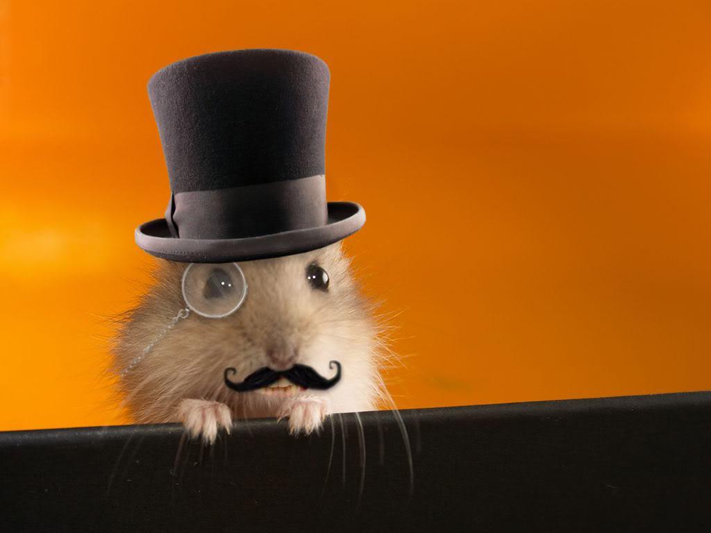 Hamster Wallpaper 1024x768