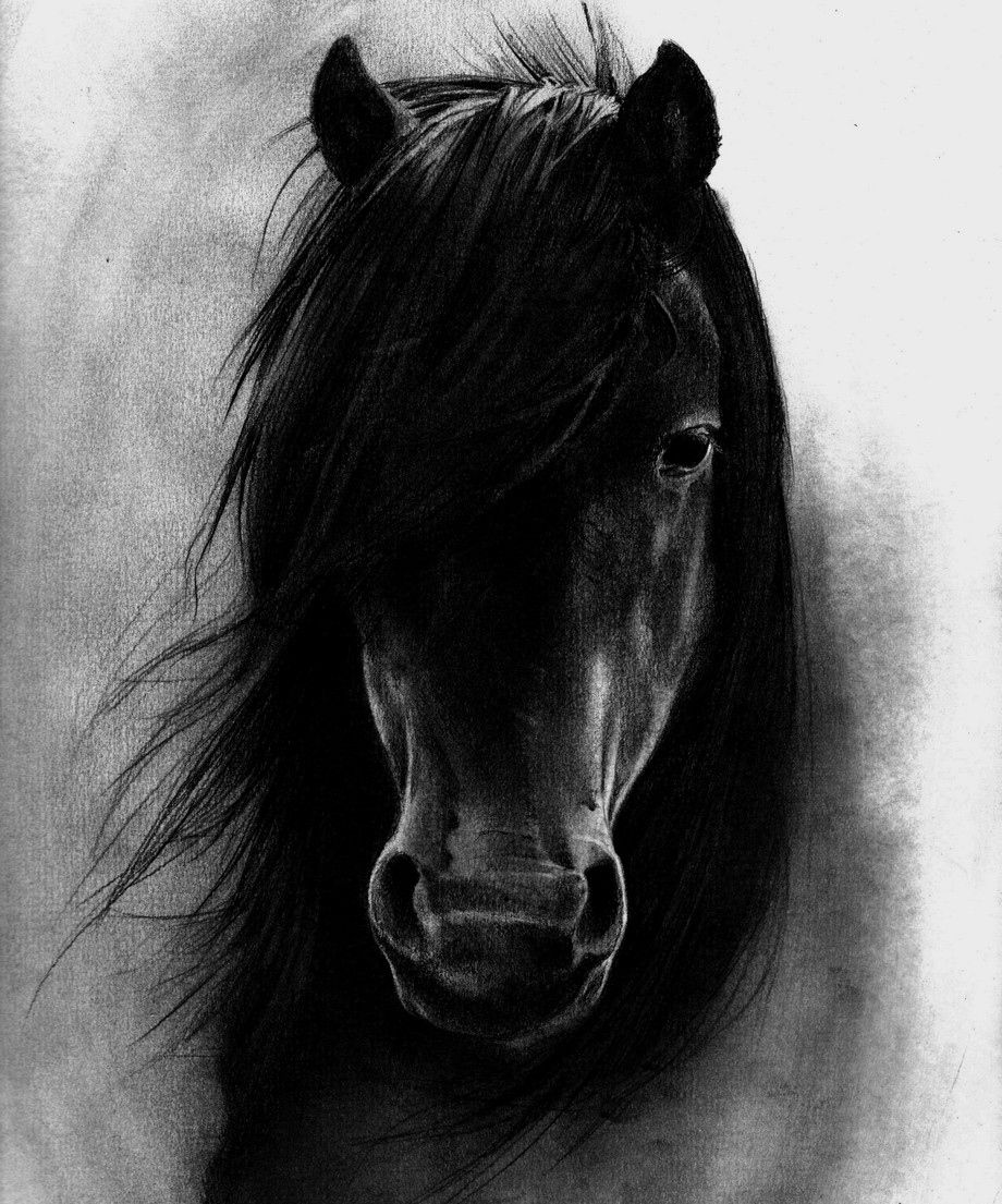 37 Blackhorse Wallpaper On Wallpapersafari