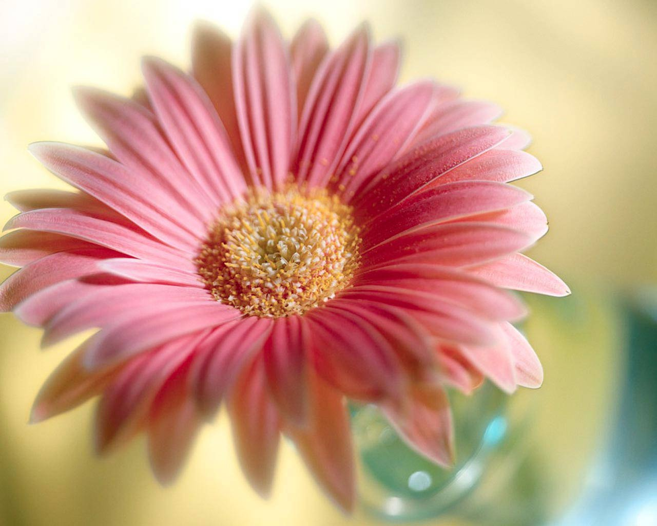 flowers for flower lovers Flowers wallpapers HD desktop Beautiful 1280x1024