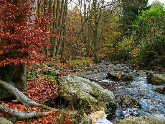 Fall creek ScreensaverWallpapers Pinterest 560x420