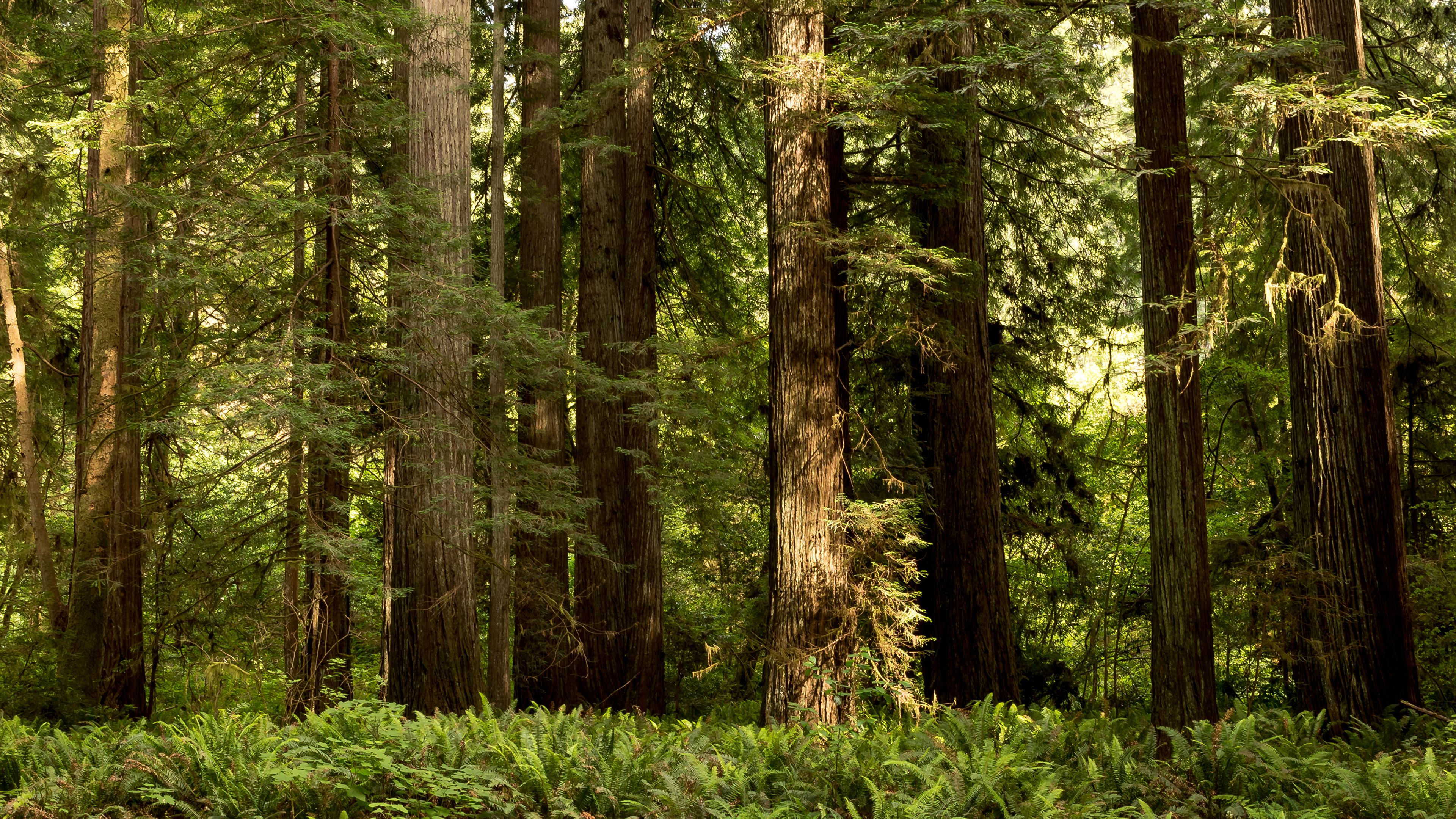 Wallpapers California USA Redwood National State Parks 3840x2160 3840x2160
