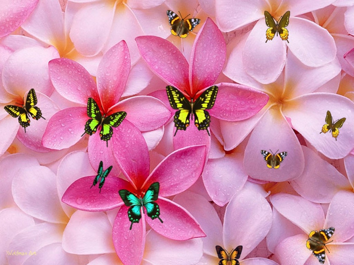 cute girly hd wallpapers cute floral wallpapers for girls 1152x864