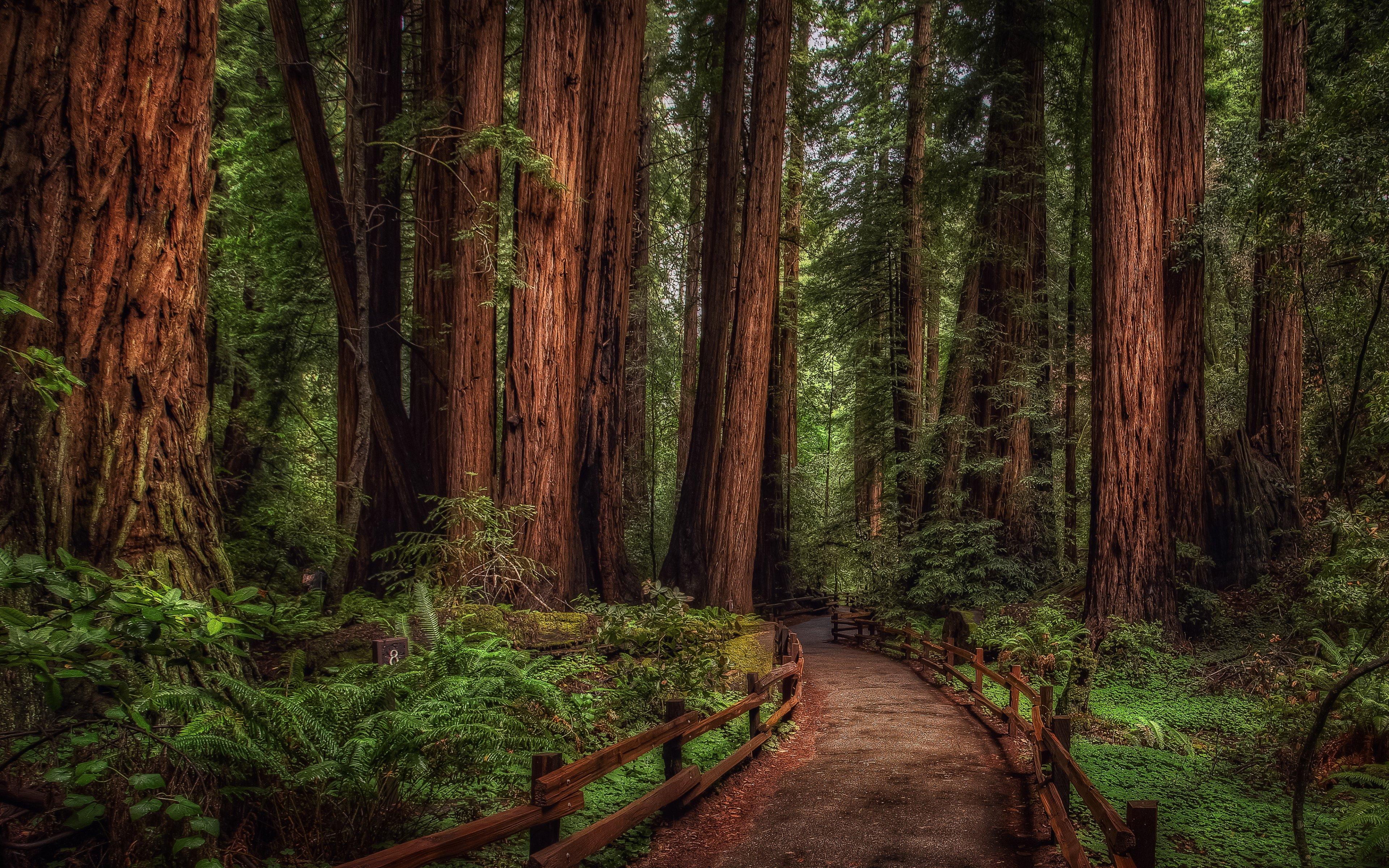 Muir Woods California widescreen wallpaper Wide WallpapersNET 3839x2400