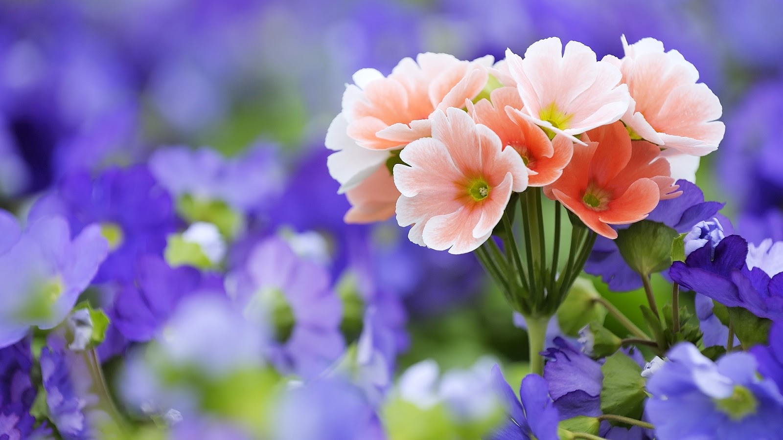 Pretty Flowers Wallpaper 1600x900