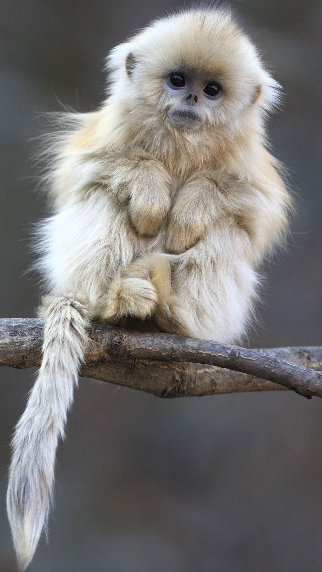 28 Cute Monkeys Wallpapers On Wallpapersafari