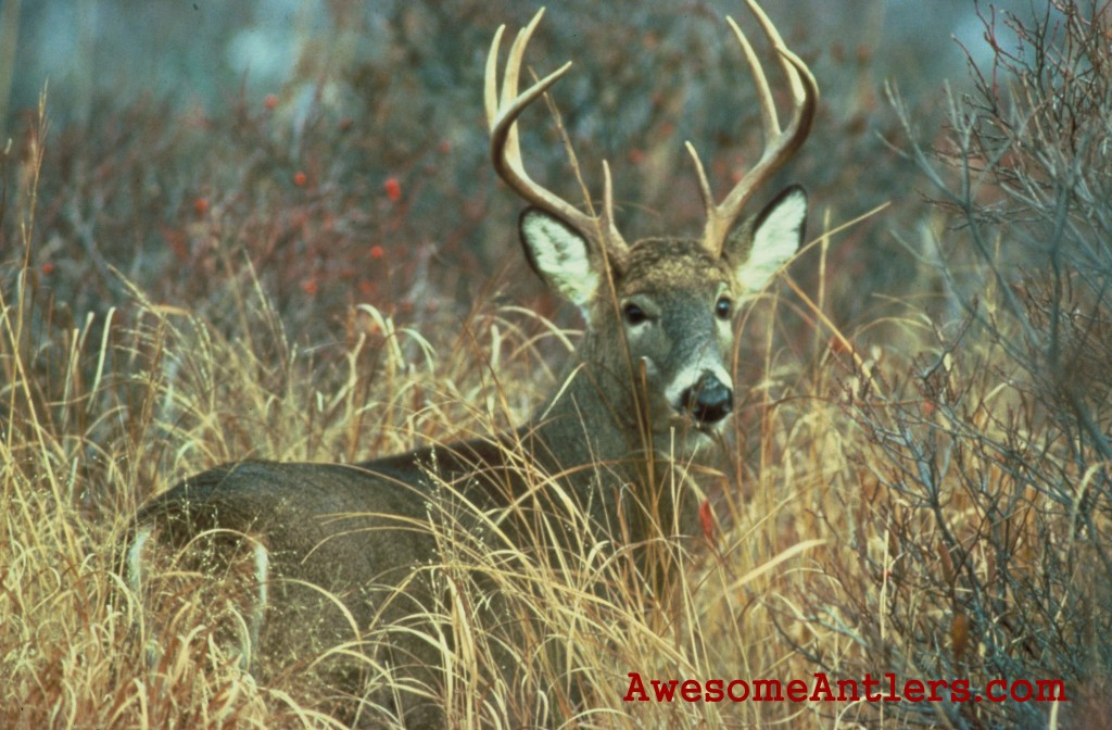 Deer Backgrounds Of whitetail deer and monster 1024x672