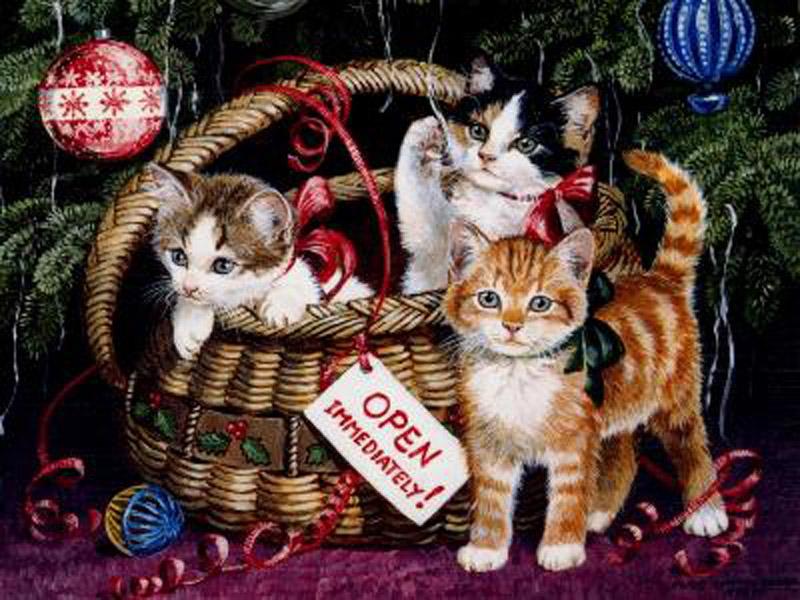 free christmas wallpaper with cats wallpapersafari