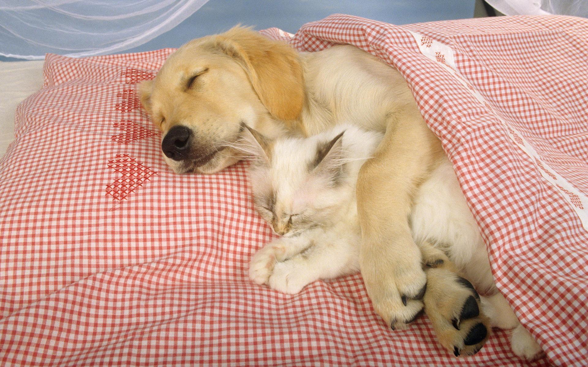 wallpaper cats and dogs   HD Desktop Wallpapers 4k HD 1920x1200