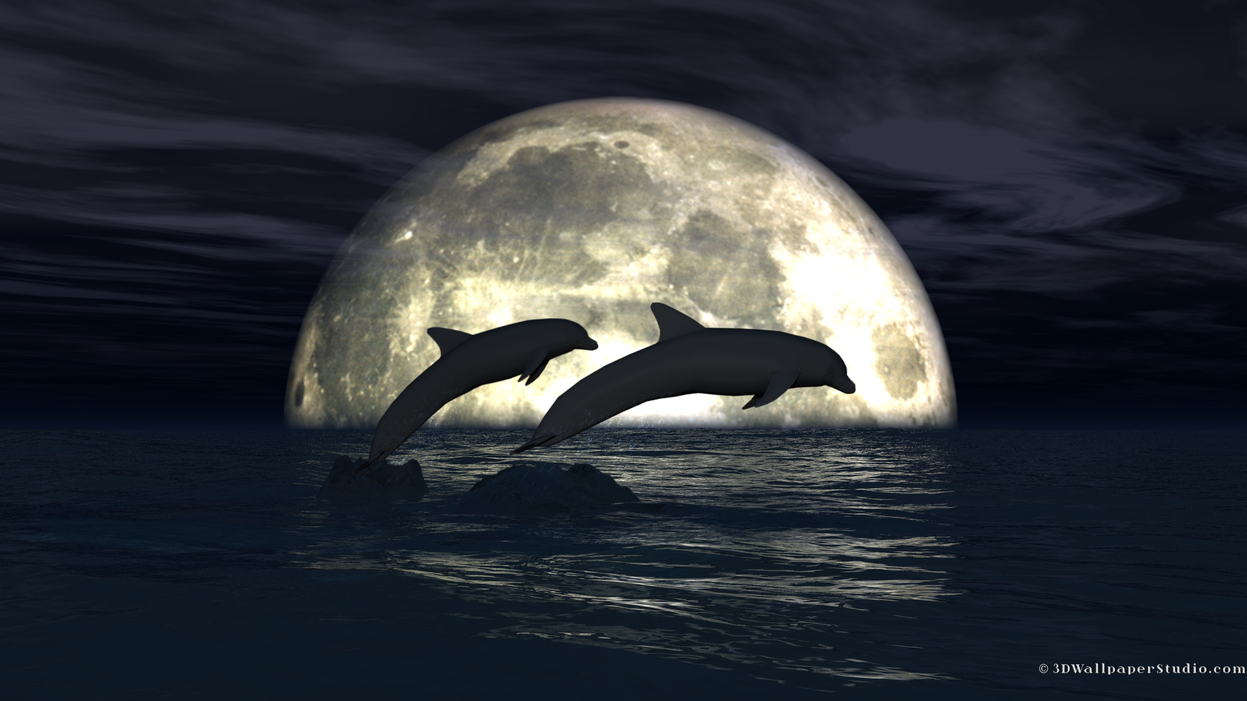 Dolphins wallpaper   1021465 2560x1440