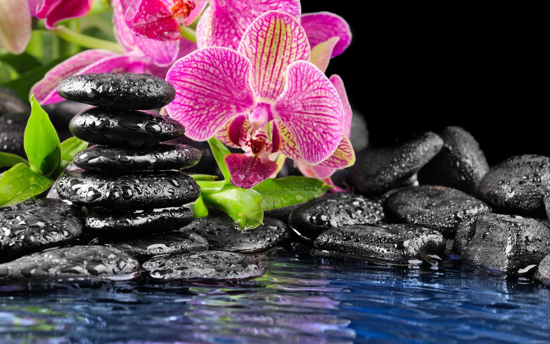 Orchids Wallpapers Computer Direct Hd Download 1920x1200