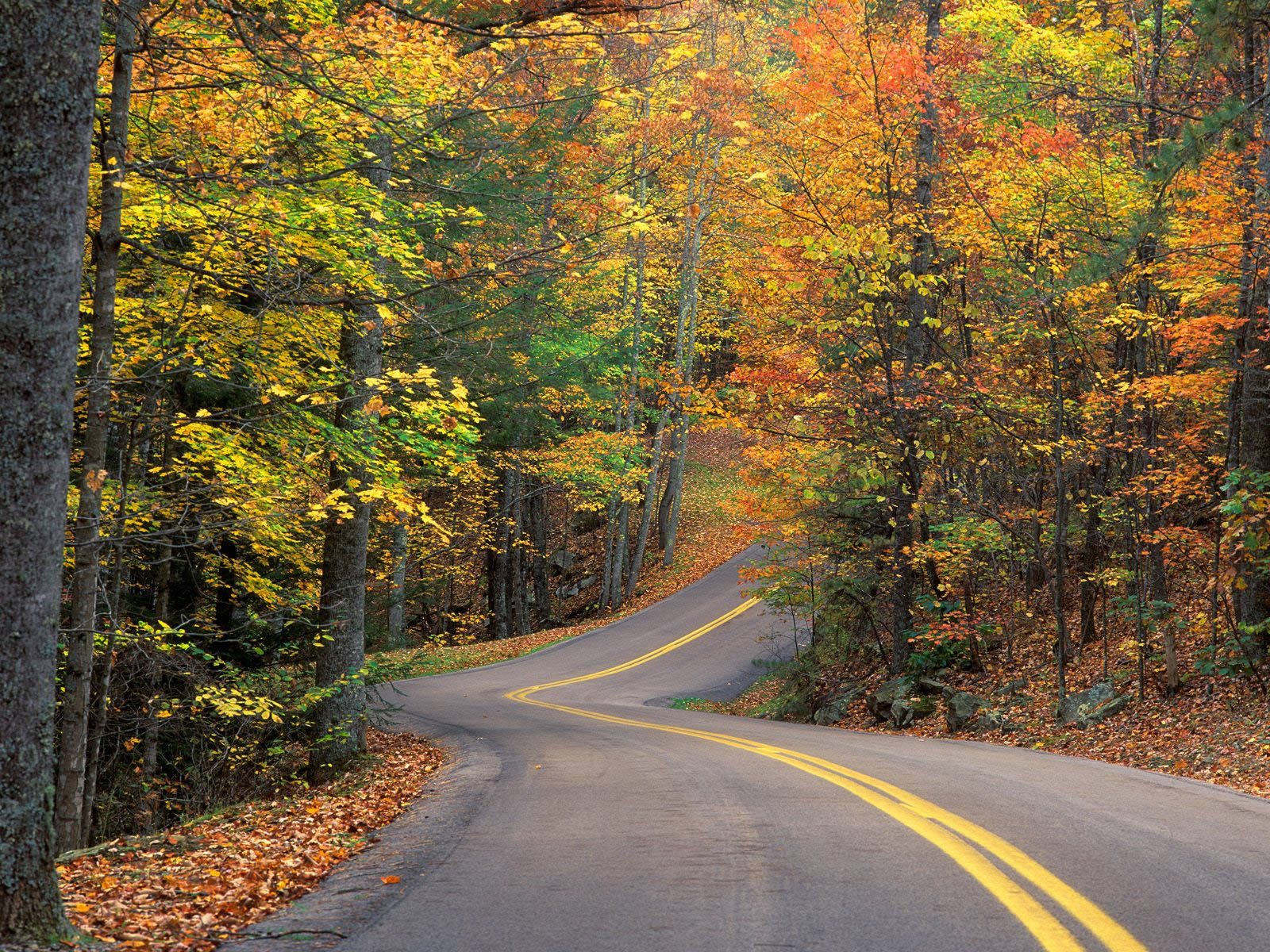 Latest Top HD Autumn Wallpapers HDIMAGESPLUS 1600x1200