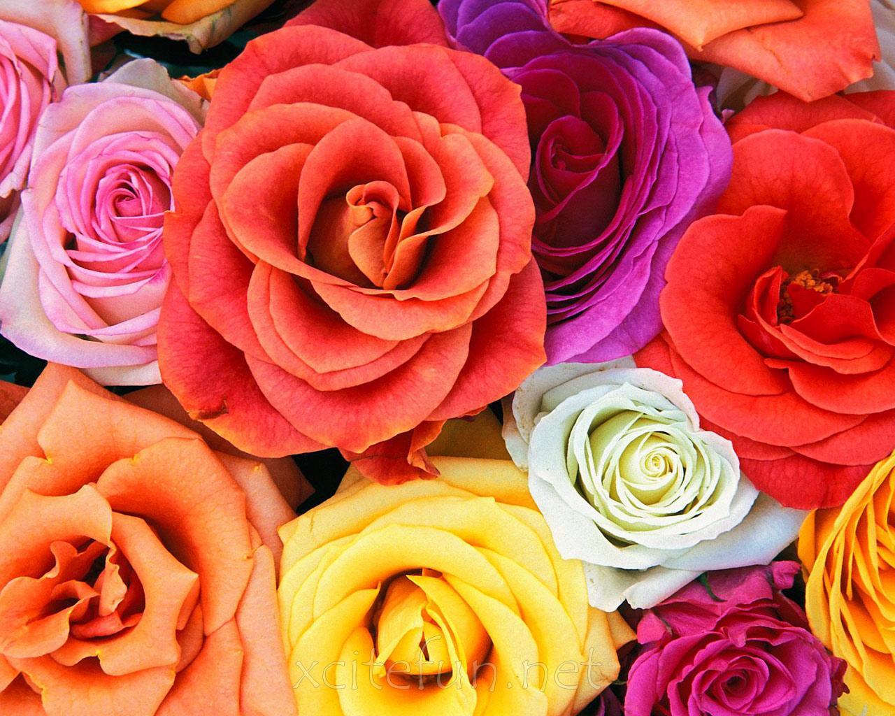 100 Most Beautiful Flower Wallpapers Flowers Healthy