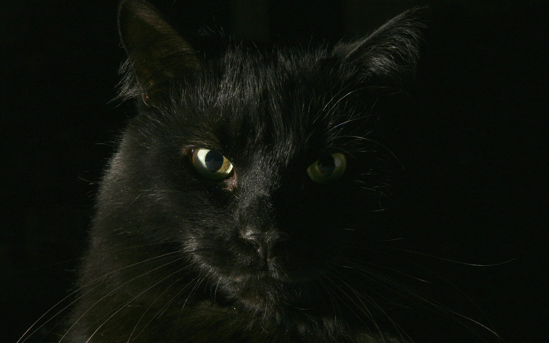 black cat wallpaper for computer - wallpapersafari