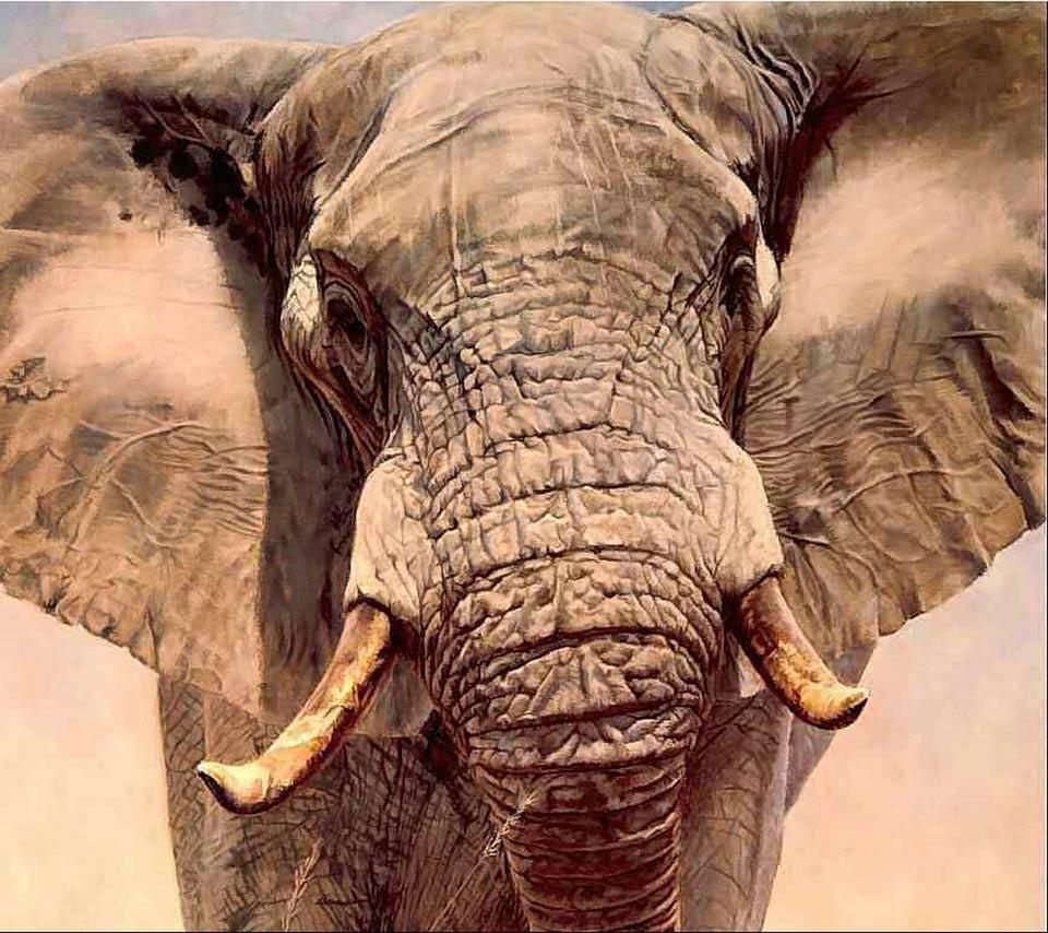 elephantsanimalswild animalsskin 960x854