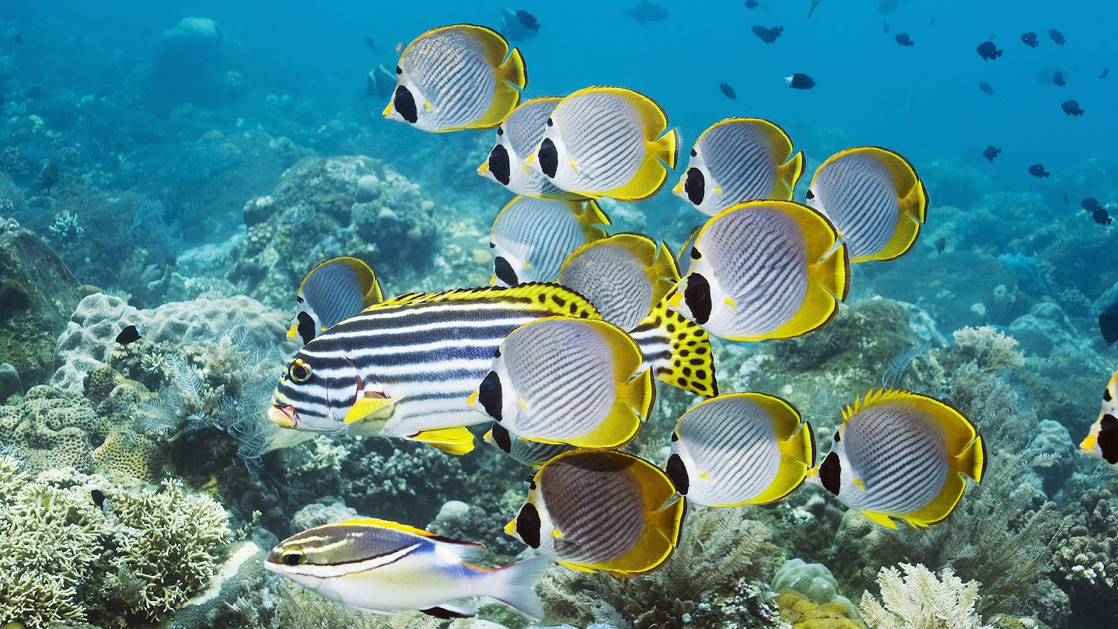 Free Download Wallpaper Tropical Fish Wallpapers Hd
