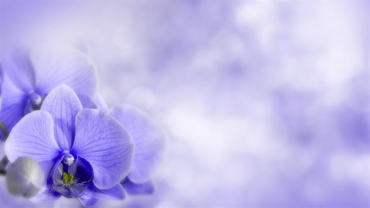 Light Purple Flowers Wallpaper Beautiful Light Purple Flowers 729x410