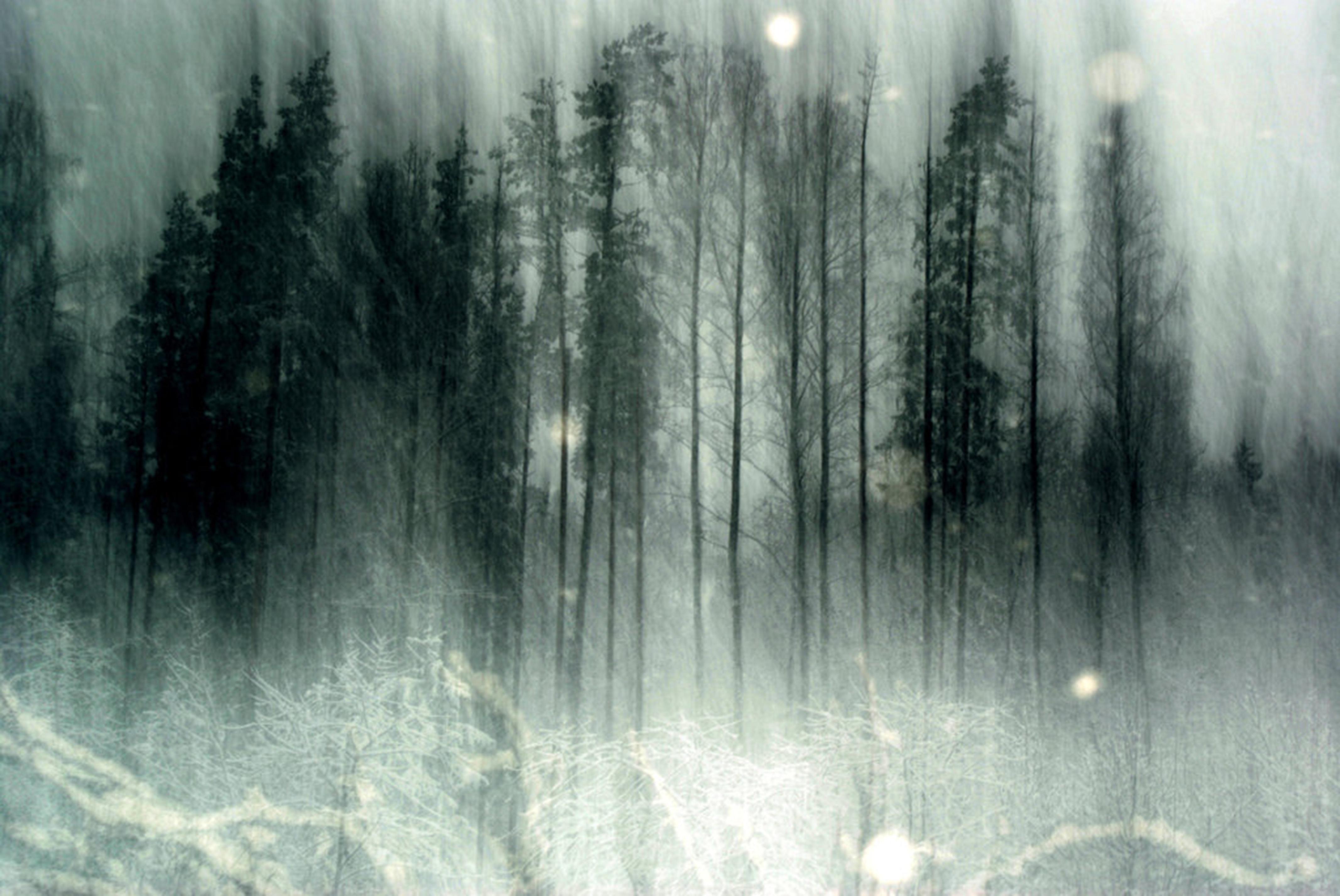 Haunted Forest Wallpaper - WallpaperSafari