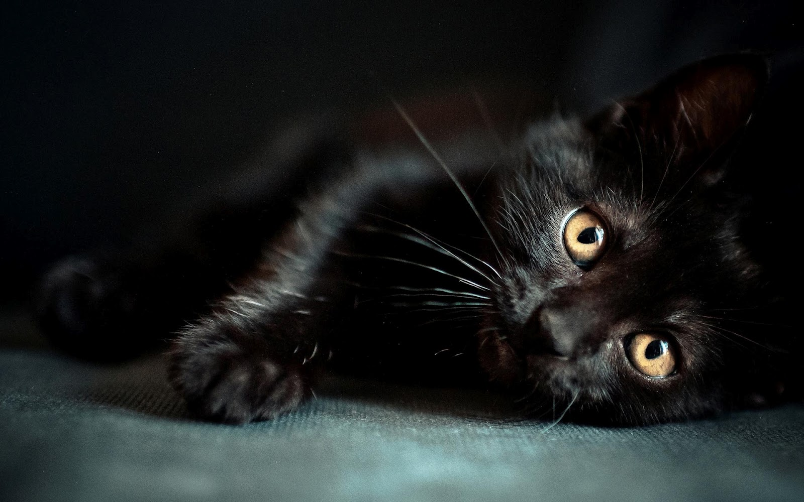 45 Black Kitten Wallpaper On Wallpapersafari