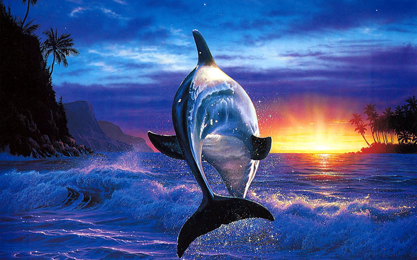 windows 1 0 wallpaper dolphin - photo #10