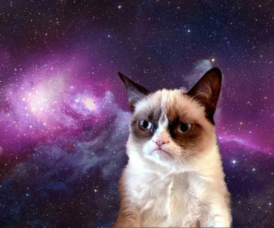 Cat Wallpapers For Iphone: Grumpy Cat Wallpaper For Phone
