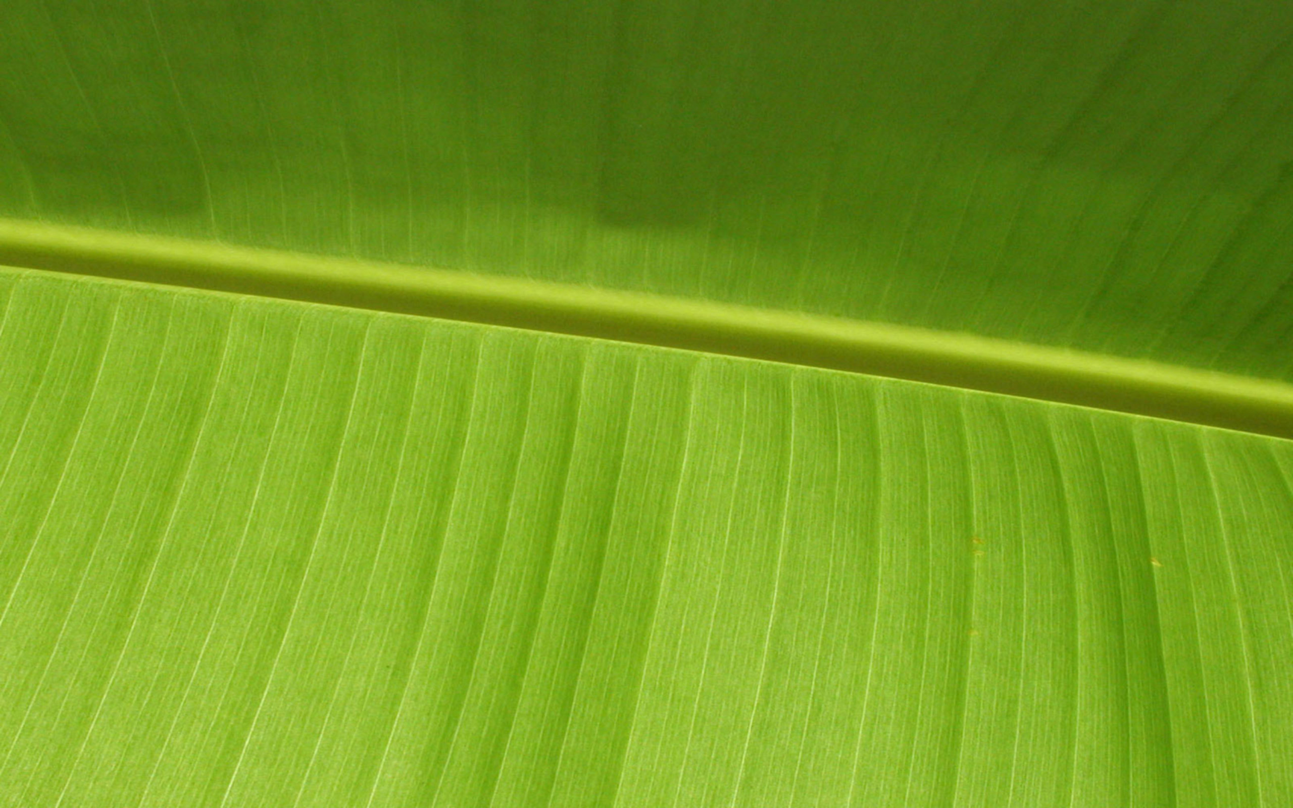 Banana Leaf Wallpaper Banana Leaf Wallpaper 2560x1600