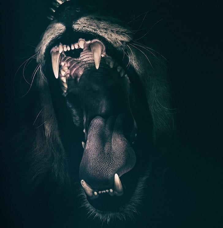 HD wallpaper angry roaring fear lion strength teeth mammal 728x743