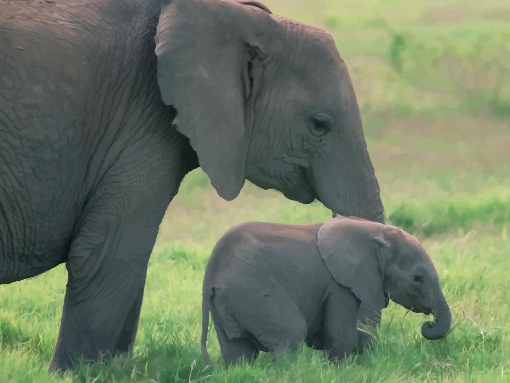 Baby Elephant 1024x768