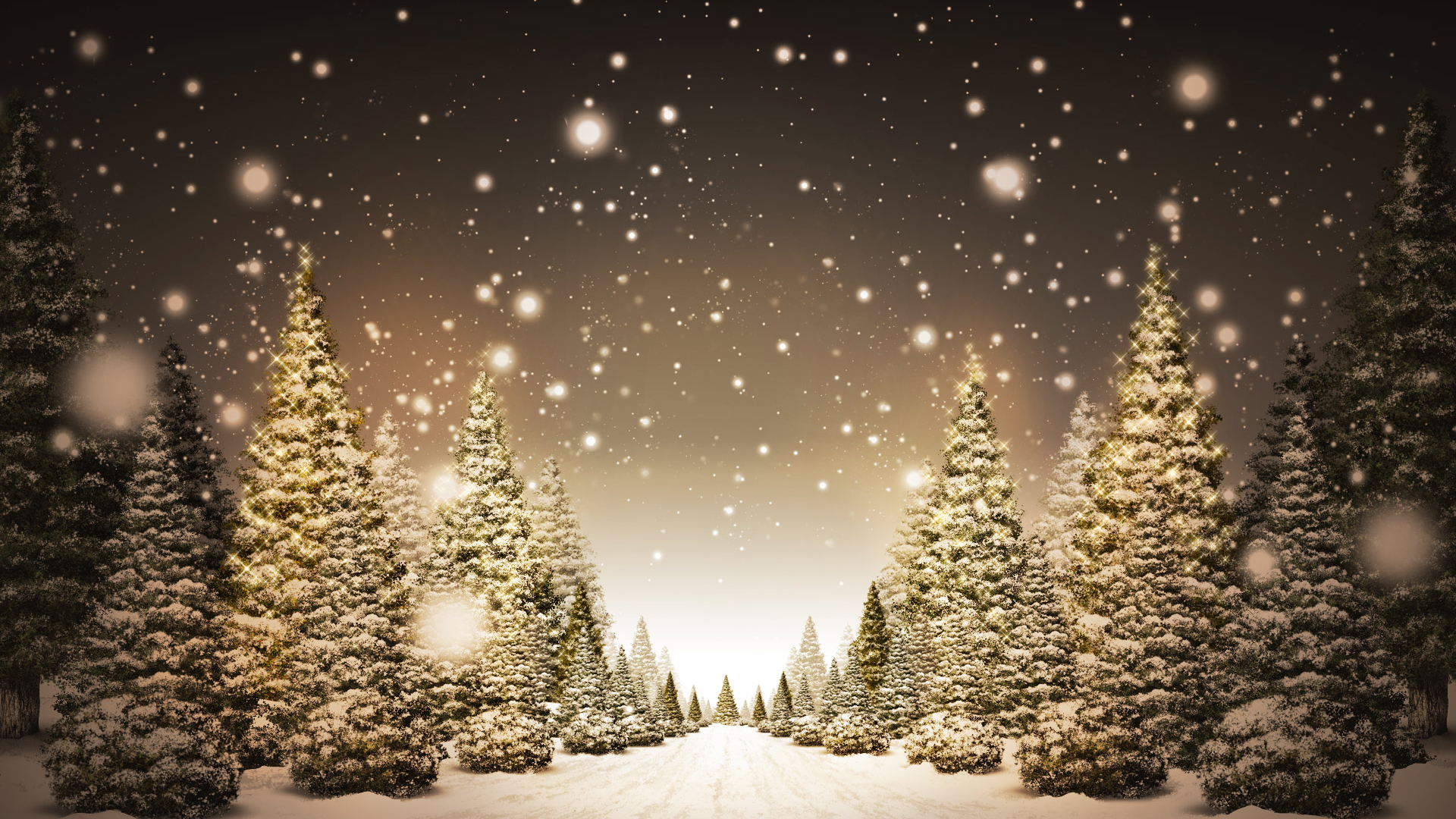 Christmas Trees in Snow HD Wallpaper FullHDWpp   Full HD Wallpapers 1920x1080