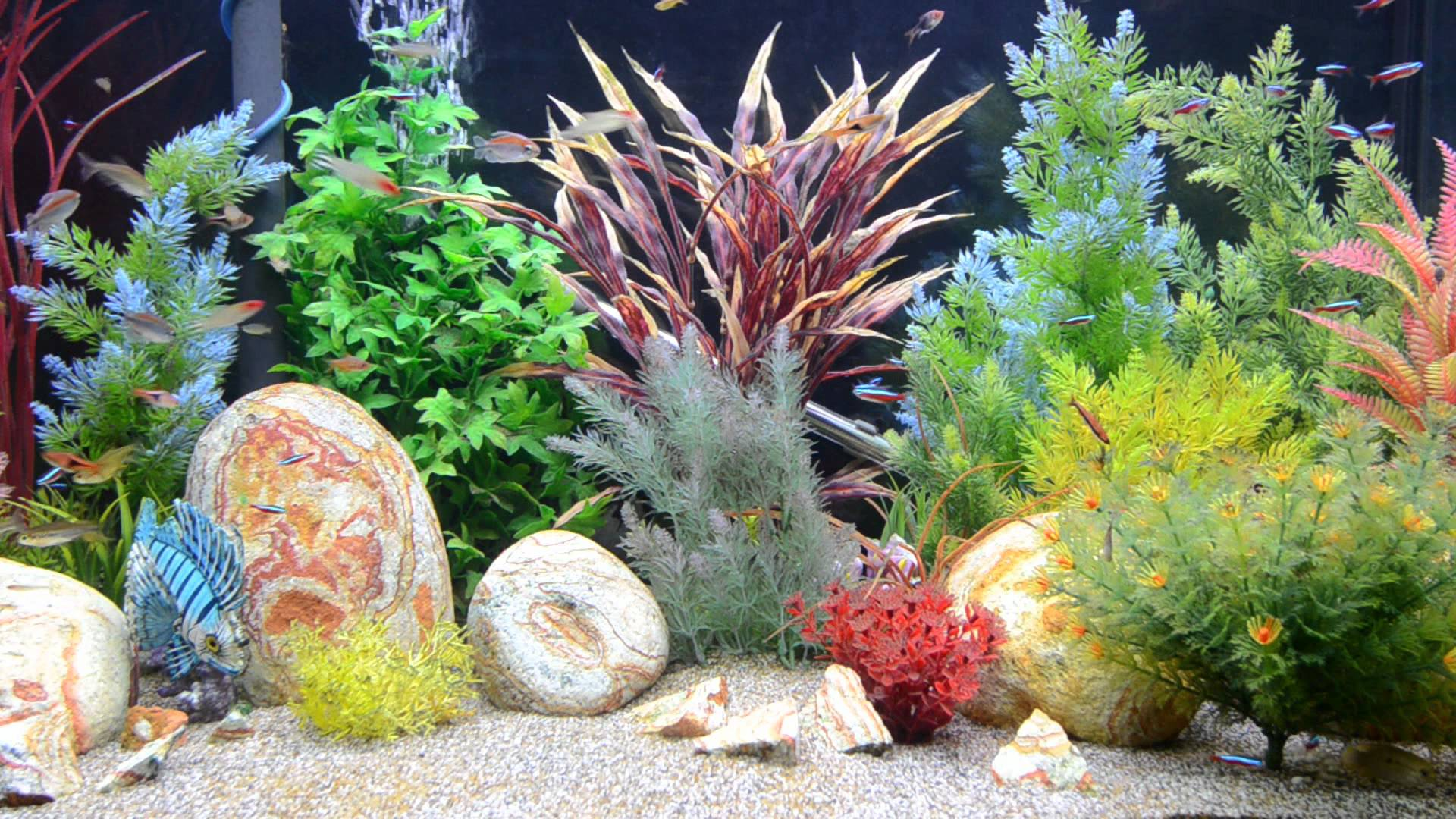 Aquarium screensaver fish tank 1080p hd - Aquarium Screensaver Fishtank 1080p Hd Tropical Aquarium