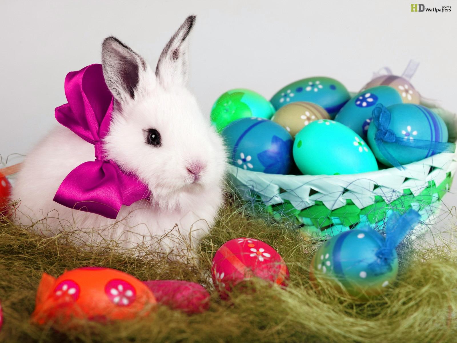 Cute Bunny image Wallpaper Beautiful Sweat Rabbits Picture HD 1600x1200