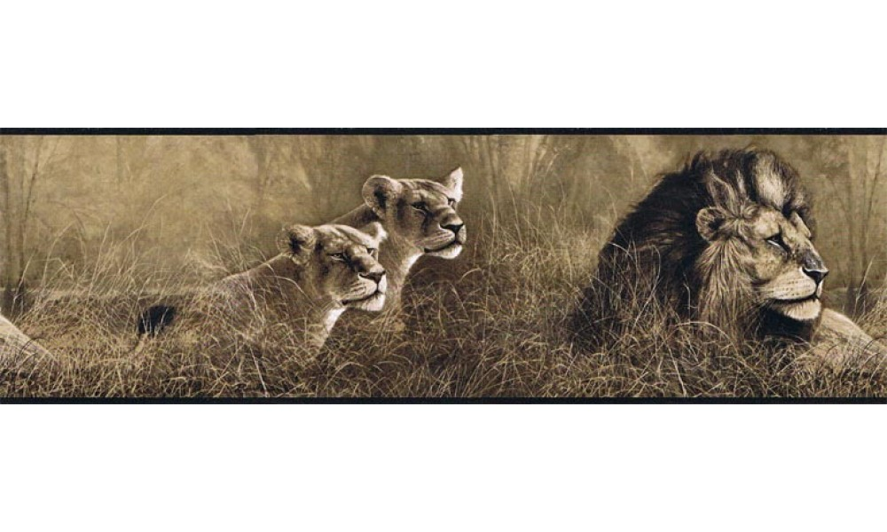 Home Animal Borders Wild Cats Animals Wallpaper Border B76463 1000x600