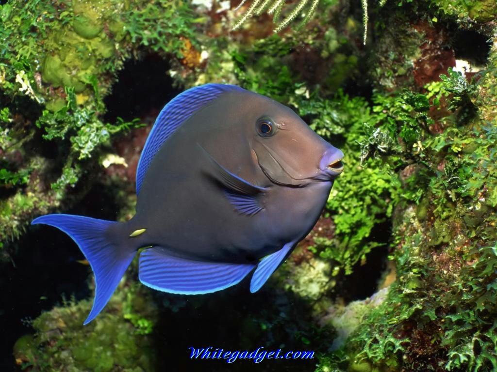 Free Download 109078 Tropical Fish Wallpaper Tropical Fish