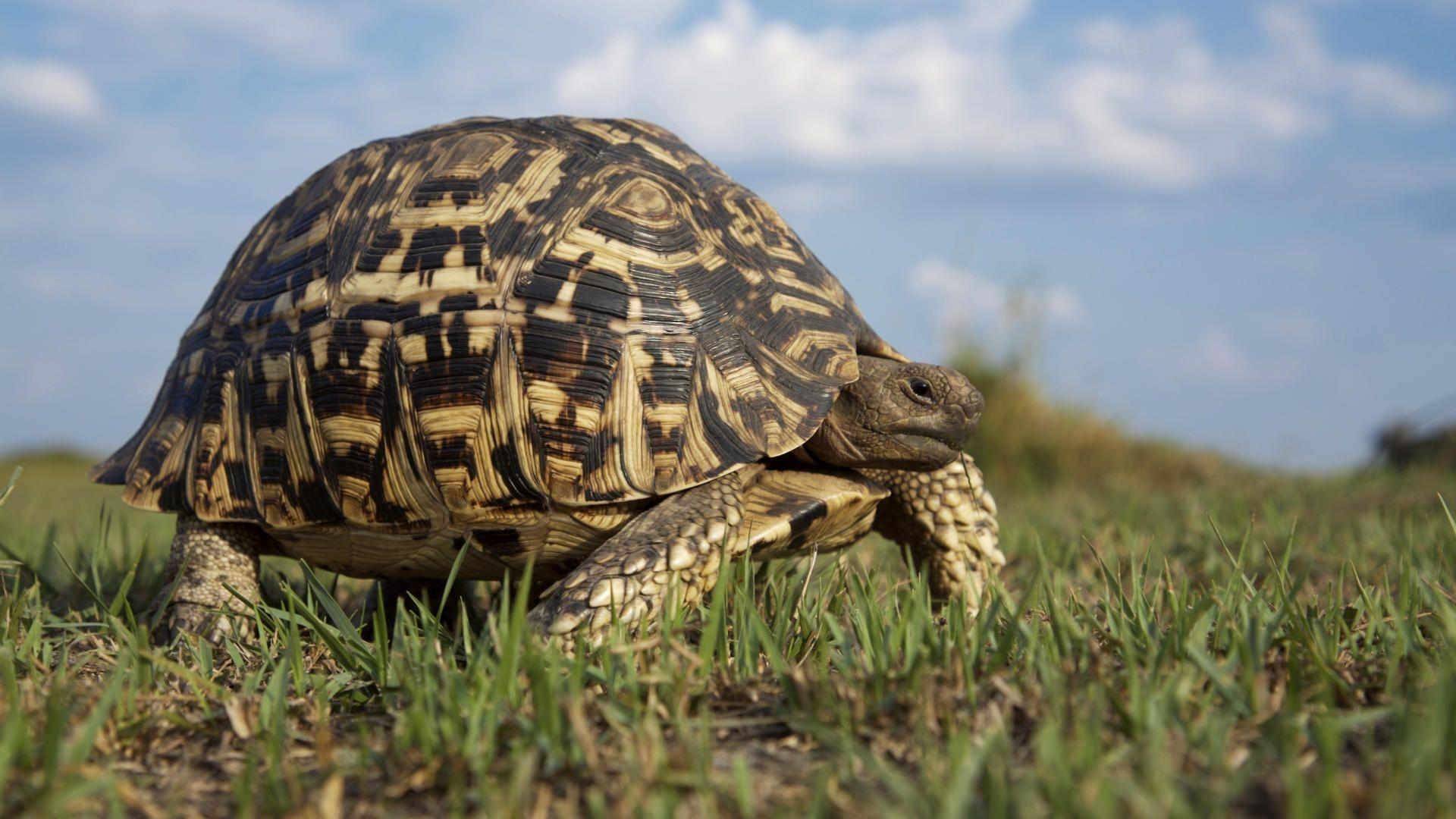 Turtle walks wallpaper download Turtle walks Turtle walks hd 1920x1080