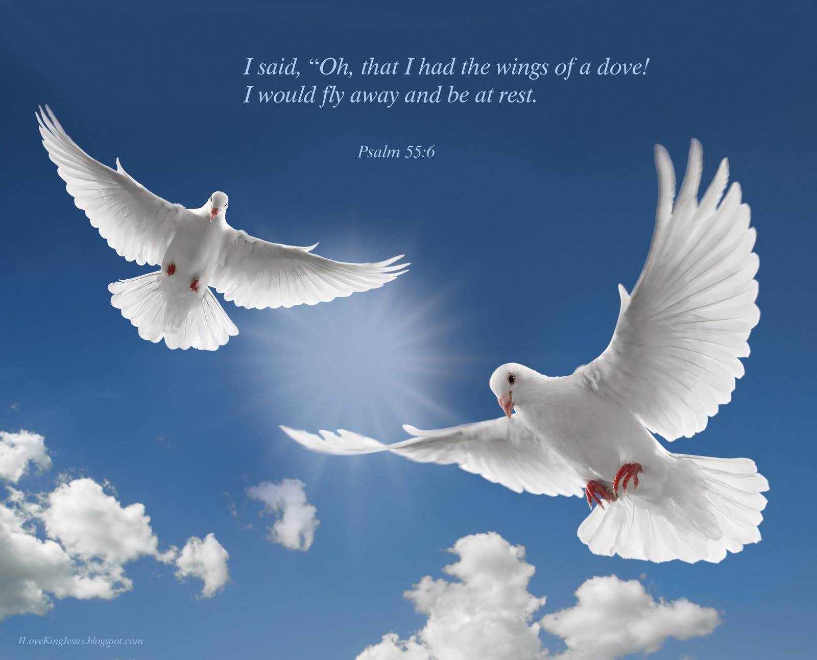 556   Like A Dove Wallpaper   Christian Wallpapers and Backgrounds 1600x1293