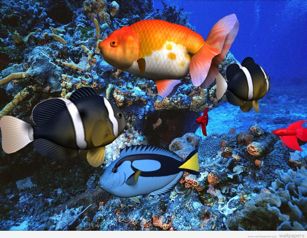 HD 3D Wallpapers 3D Animated Wallpapers Fish Ocean Download 1024x792