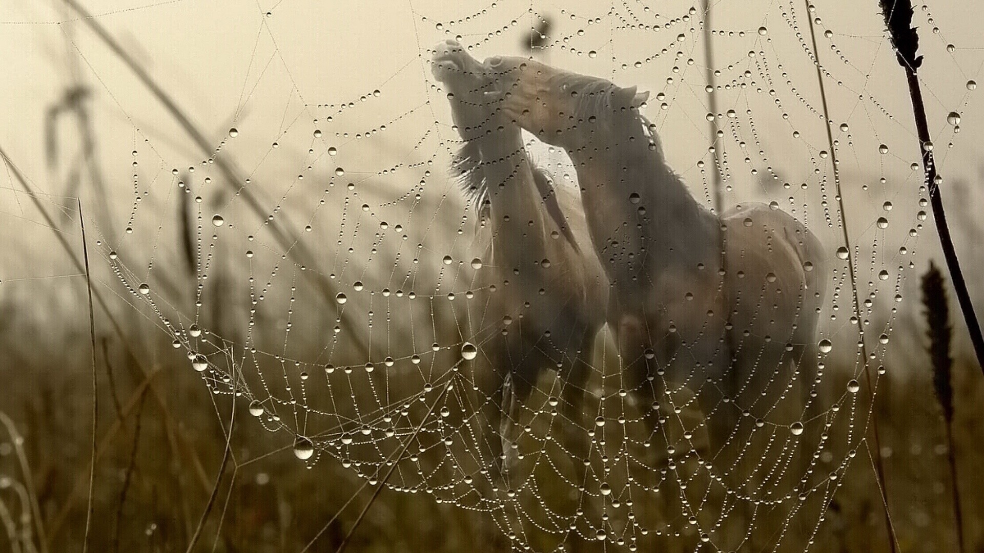 Spider web in the grass Wallpaper Wallpaper Collective 1920x1080